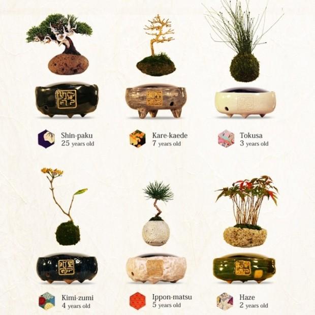 air-bonsai-3