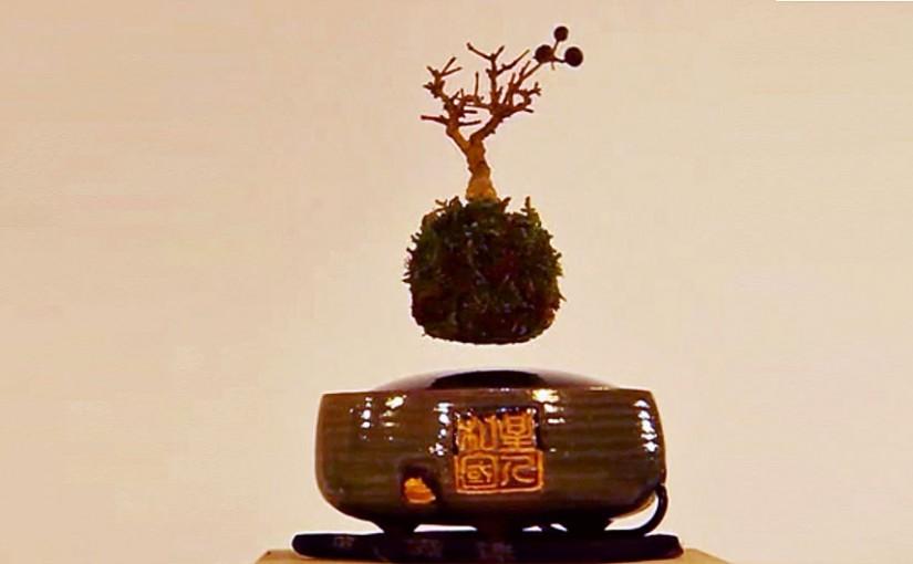 Új őrület: lebegő bonsai